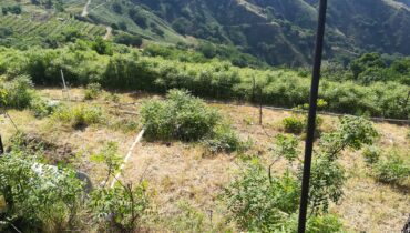 Mili San Pietro in vendita terreno agricolo